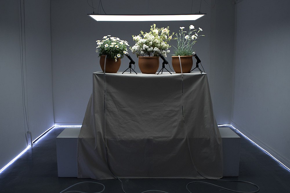 Victoria Walters - Emergency Conference (for Joseph Beuys)